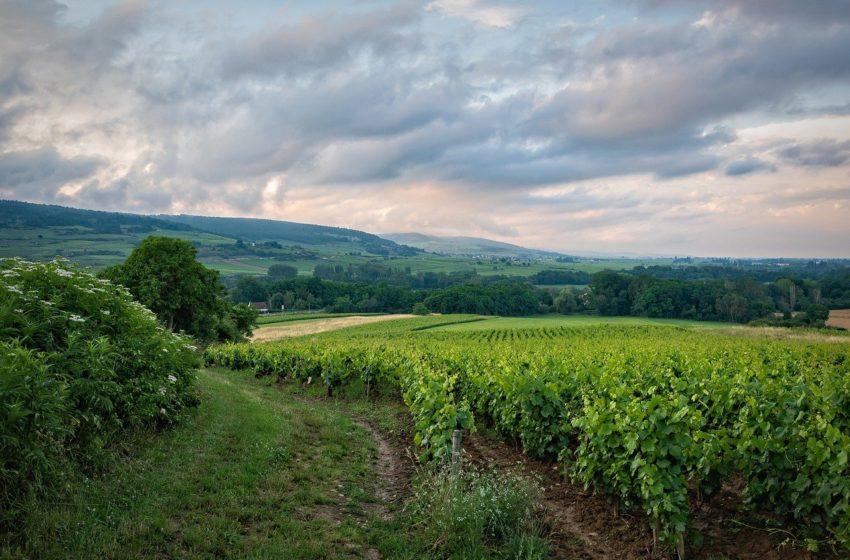 Zones viticoles à Colmar, danger ?
